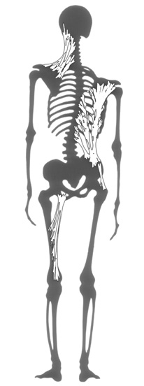 grey_skeleton